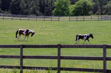 Horses horsing around