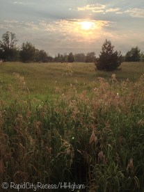 sleepy pasture