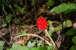 red berries on stalk