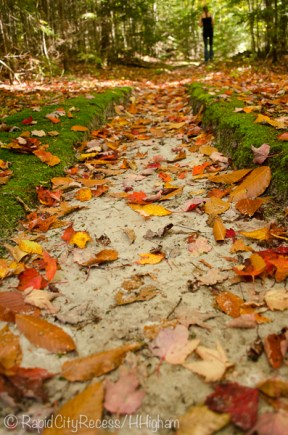 moss-curbed trail