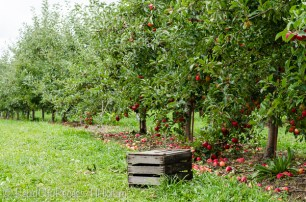 orchard and crate