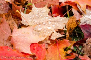 raindrops on leaves-5