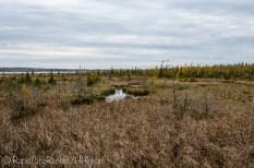Skegemog swamp-3