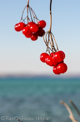 red berries on blue