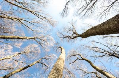tall canopy