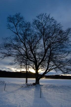 drifting tree-2
