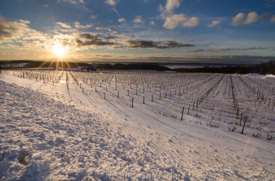 Winter vineyard sunburst