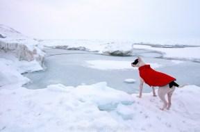 Petey on ice