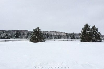 fresh snow-19