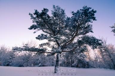 fresh snow-2