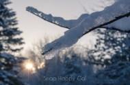 fresh snow-5