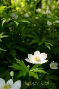 wildflower-3