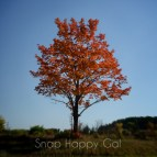 one fall tree