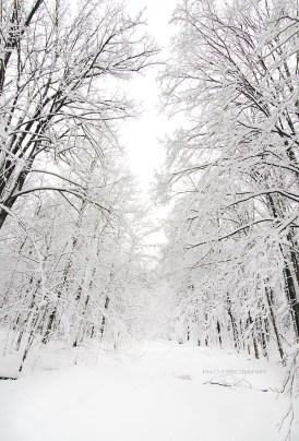 snowy-road2