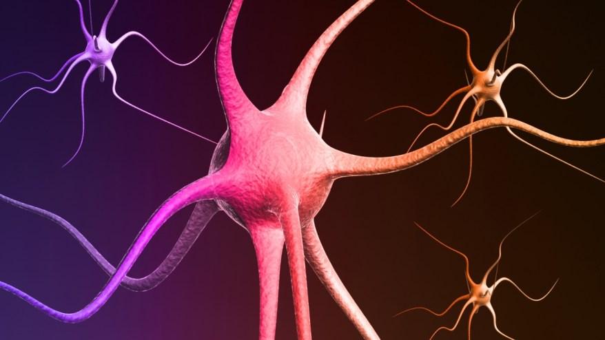 nervogen