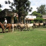 Daytrip from Buenos Aires: San Antonio de Areco's ranches and chocolates