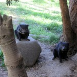 Tasmanian Devil Conservation Park – devils gone wild (with video!)