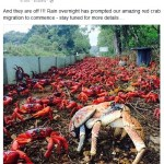 Christmas Island Crab Migration: Lessons Learned from a Failed Trip
