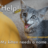 Help! My Kitten Needs a Korean Inspired Name