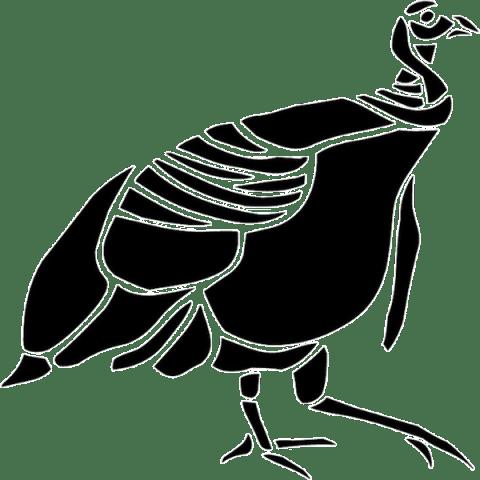 Rare Bird 101 Icon