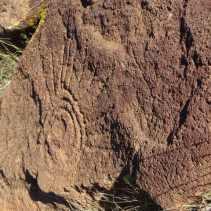 rock art in Baja Sur