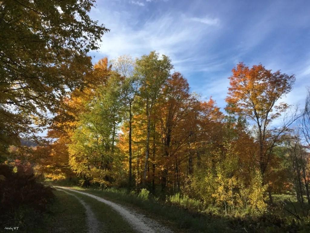 VT Fall Driveway