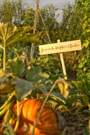 Community Gardens at Springbank –Photo by Barry Finnen