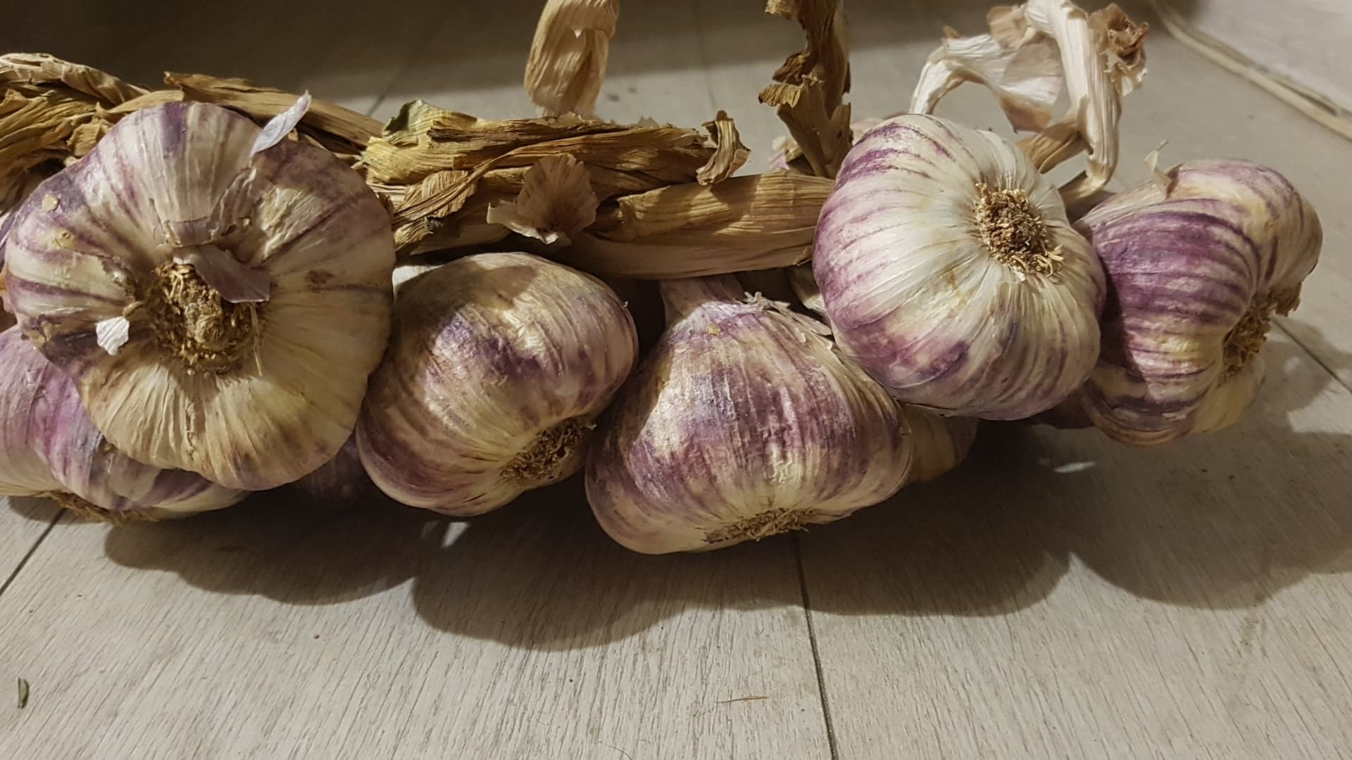 Non-GMO Elephant Garlic Corms fresh 2019 for fall planting