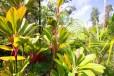 Beauty of Pahoa