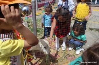 مخيم مدرسي في اختتام أنشطة التمهيدي - مدارس الرشيد الحديثة (19)