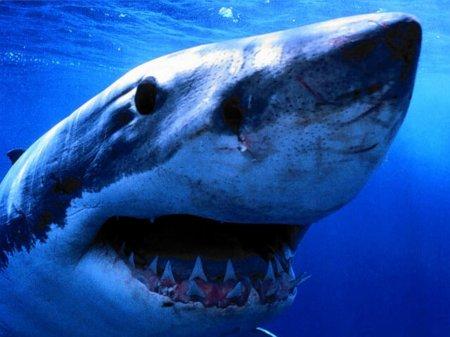 sharks013-1