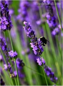 Busy Honeybee!