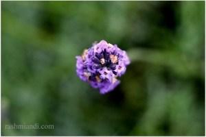 Lavender it is!!!