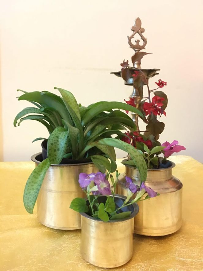 Brass lamps and old vessels with flowers and plants