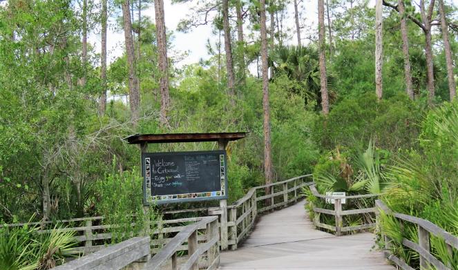 Audubon's Corkscrew swamp sanctuary