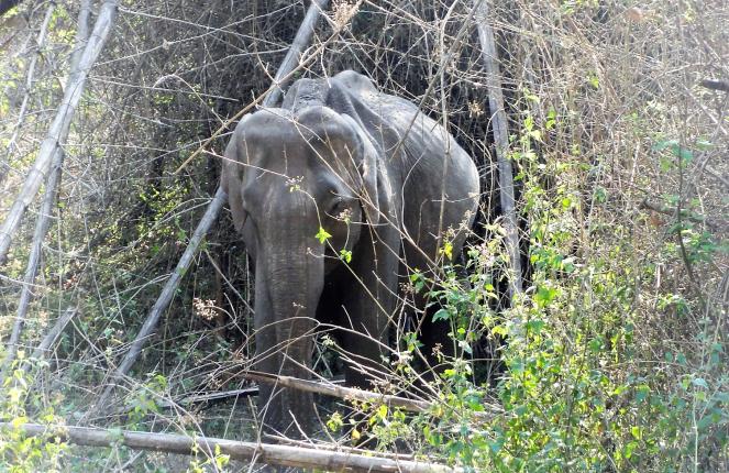 Elephants at Nagarhole