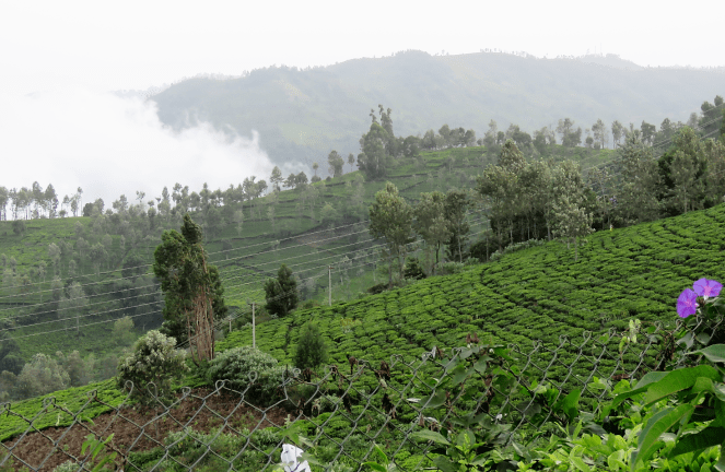 Mist clad Nilgiris