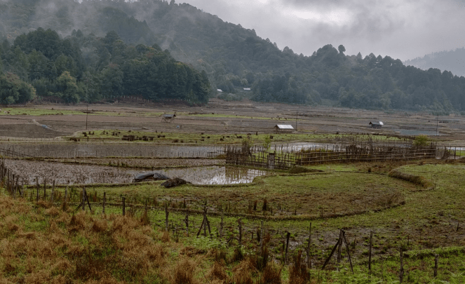 A view of Ziro valley