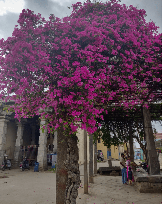 Flower decked Mandapam outside the temple