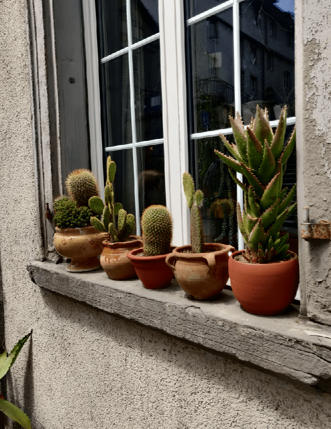 Plants by the window sill