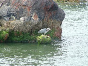 heron@tin.rock