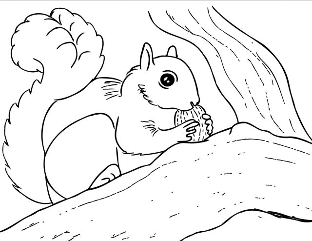 Squirrel Coloring Pages. 27 Images Free Printable