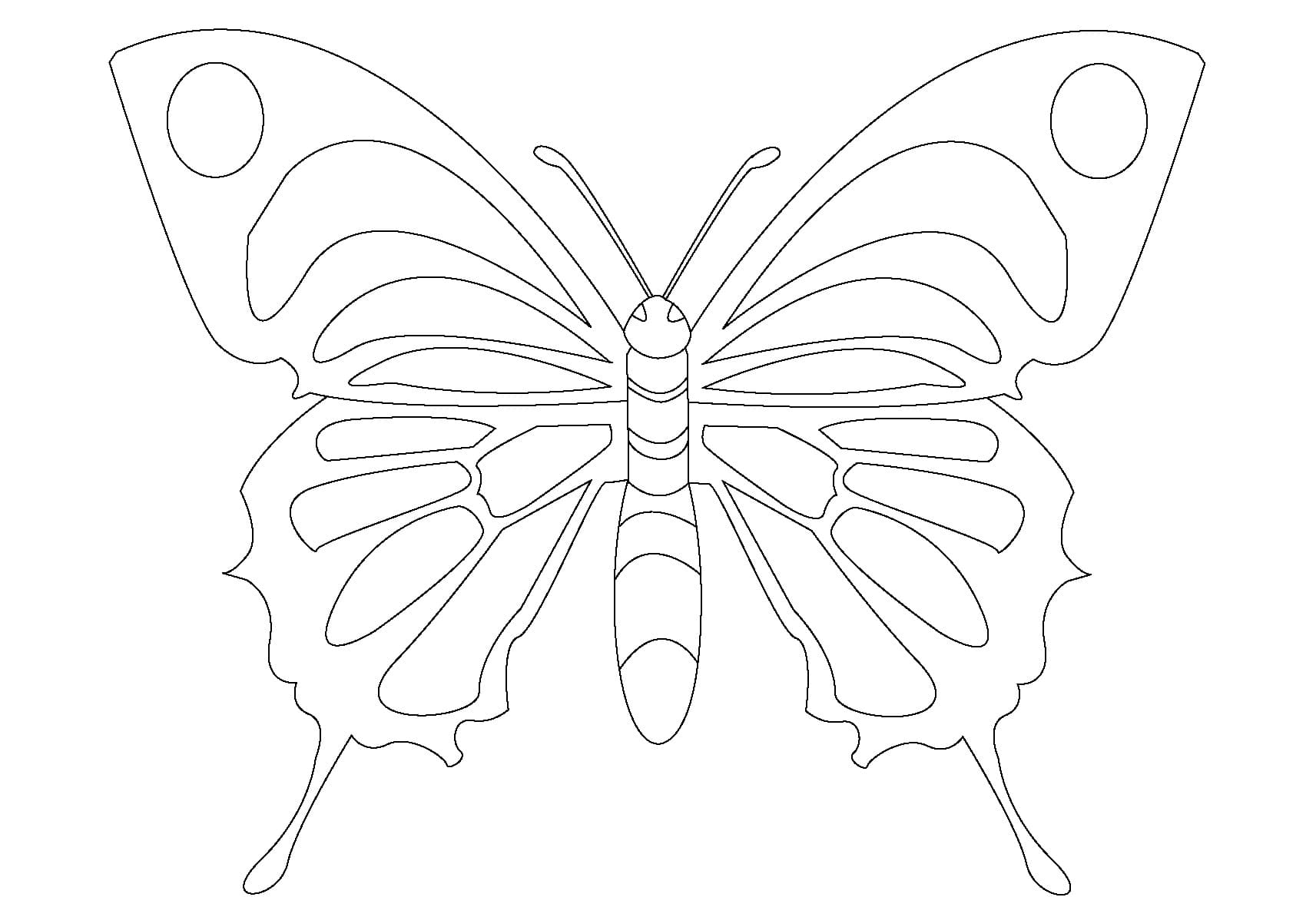 Butterfly Coloring Pages For Kids 100 Images Print For Free