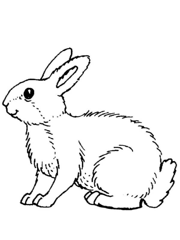 Раскраски зайцев для детей 100 картинок для раскрашивания