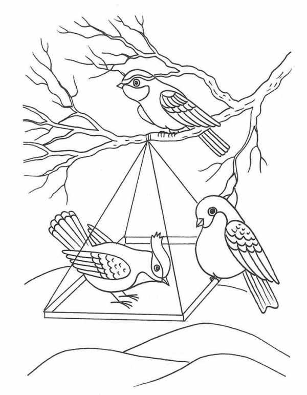Раскраска птицы зимой скачать и распечатать