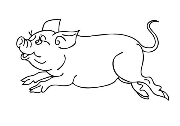 Раскраска свинья скачать и распечатать