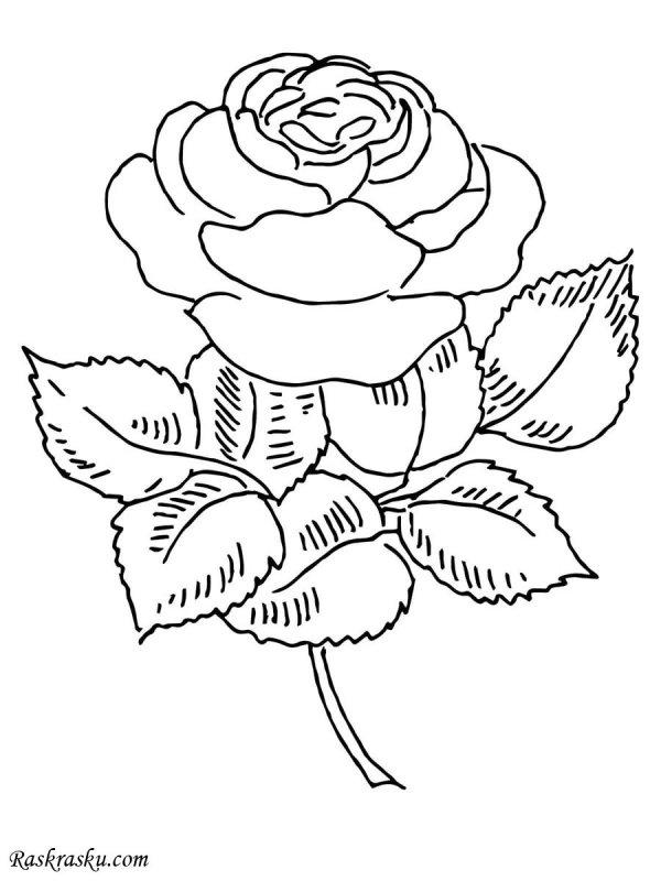 Раскраска Роза Раскраски цветы для детей распечатать