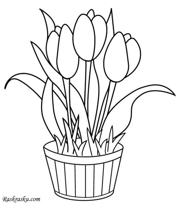 Раскраска Тюльпаны в горшке Раскраски цветы