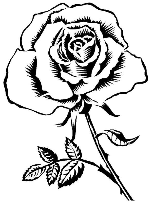 "Все изображения ""Цветок Картинка Черно-Белая"" / picsbase.ru"