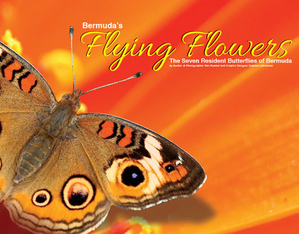 bookcover_flying